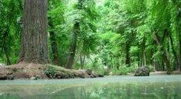 imagen del contenido Según la FAO, América Latina es una de las tres regiones del mundo donde sigue la deforestación