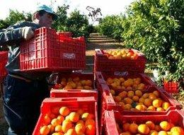 imagen del contenido Uruguay tiene la posibilidad de potenciar su sector citrícola si mejora su oferta productiva e integra prácticas que destaquen los valores ambientales y de economía verde