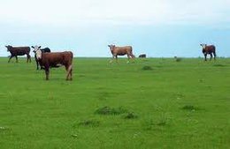 imagen del contenido Productores rurales se concentraron en las entradas de Salto y Paysandú