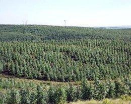 imagen del contenido Predomina una visión positiva en las empresas del sector Industria Forestal