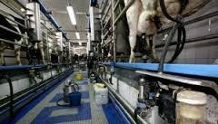 imagen del contenido Industria láctea: Trabajadores se movilizarán por respuestas a la situación del sector y un debate nacional sobre lechería
