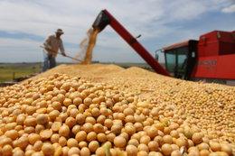 imagen del contenido La mayor cosecha de soja y maíz del MERCOSUR
