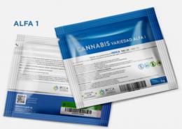 imagen del contenido El 19 de julio sale a la venta la marihuana estatal