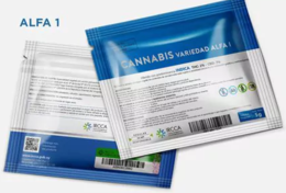 imagen del contenido Mejoró la distribución de cannabis en farmacias