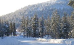 imagen del contenido ¿Habría riqueza en Finlandia sin bosques?