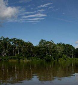 imagen del contenido Científicos peruanos descubren un criadero natural de especies en la Amazonia