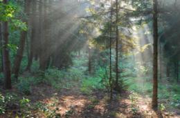 imagen del contenido Hoy Noruega tiene el triple de madera en los bosques que la que tenía hace 100 años