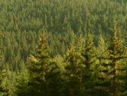 imagen del contenido Los precios de los bosques suecos están revalorizándose desde 2014