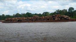 imagen del contenido Cómo afectan EEUU y las políticas del gobierno peruano la industria forestal y la exportación de madera