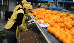 imagen del contenido Cítricos y arándanos presentes en la principal feria de frutas del mundo