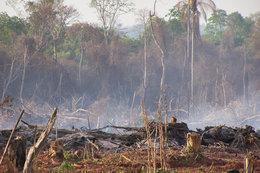imagen del contenido Denuncia la deforestaron más de 128 mil hectáreas de bosques en Argentina