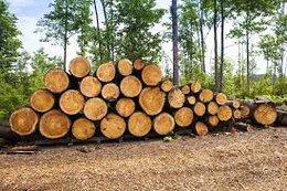 imagen del contenido El 65% de la madera producida en Uruguay se transforma en pulpa de celulosa
