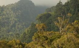 imagen del contenido Se lanzó el primer bono verde que emitirá Asia por US$95 millones