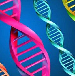 imagen del contenido Identifican 538 genes relacionados con la inteligencia
