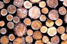 imagen del contenido Cadena forestal: Productos de madera se consolidan en los mercados internacionales