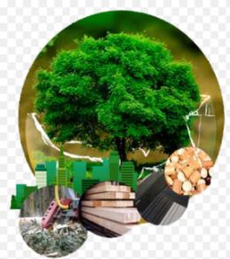 imagen del contenido Se realiza en España el primer Foro de Bioeconomía Forestal del Sureste Europeo
