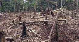 imagen del contenido Corea del Norte registra una denudación forestal del 32 por ciento