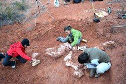 imagen del contenido Encuentran fósil de dinosaurio en Argentina que adelanta en 30 millones de años el origen del gigantismo