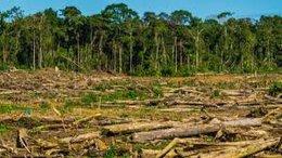 """imagen del contenido Perú: """"Lluvia de millones"""" del BID en nombre de la deforestación"""