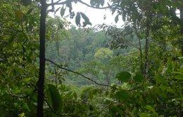 imagen del contenido Gestionar bien los bosques es posible: Costa Rica, México, Guatemala y Bolivia van por buen camino, según la FAO