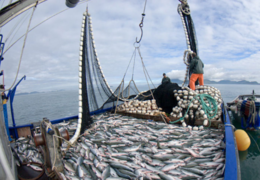 imagen del contenido Exportaciones de pescado aumentaron en valor, 8%, y en volumen, 23%, en los primeros seis meses de 2018