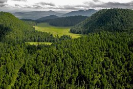 imagen del contenido México avanza en la recuperación y aprovechamiento de sus bosques naturales