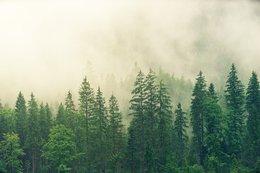 imagen del contenido Superficie boscosa del planeta aumentó 7% en los últimos 35 años, entre 1982-2016