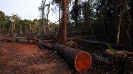 imagen del contenido Servicio Forestal (SERFOR) del Perú respondió la solicitud de verificación de embarques de madera, realizada por EEUU