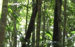 """imagen del contenido Betsabeth Cortegano: """"Los amazónicos estamos defendiendo el manejo responsable de nuestros bosques, y no el saqueo"""""""