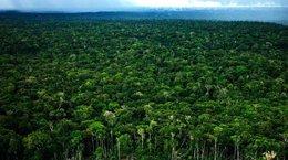 imagen del contenido Perú: Condiciones a las que se somete al sector forestal peruano pre y post Covid-19