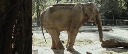 imagen del contenido Primera liberación de elefantes en cautiverio en Argentina