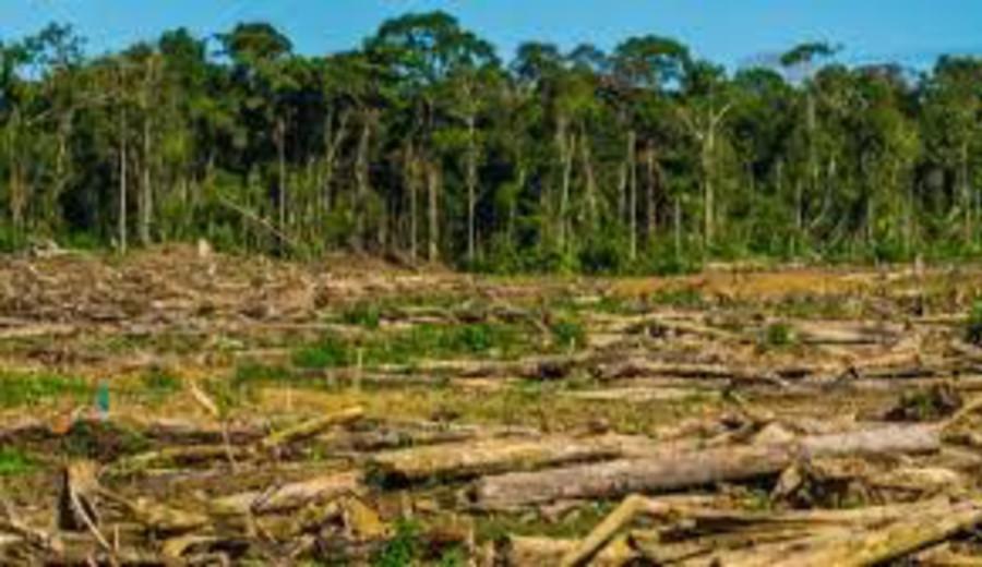 imagen de Récord histórico de la deforestación en el Perú: 203.272 hectáreas en 2020