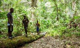imagen del contenido Deforestación en África: Camerún perdió en los últimos siete años 10 mil hectáreas de bosques
