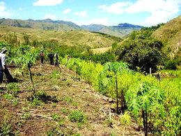 imagen del contenido Perú: El bosque, el manejo forestal, los narcos y sus aliados estratégicos directos o indirectos