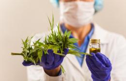 imagen del contenido US$100 millones podrán ser invertidos en industrias relacionadas al cannabis