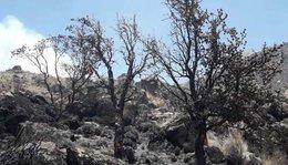 imagen del contenido Dos incendios forestales dañaron 700 hectáreas