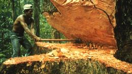 """imagen del contenido Perú recibirá de Noruega US$ 230 millones """"para reducir deforestación"""" de la Amazonía"""