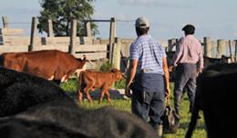 imagen del contenido Colonización invierte U$S 30 millones por año para arrendar tierras a asalariados rurales y productores familiares