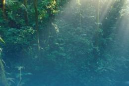 imagen del contenido Costa Rica y Estonia trabajan en la digitalización del manejo de bosques