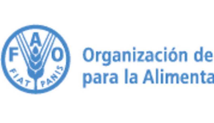 imagen de FAO hace llamamiento de emergencia para apoyar a 333 mil personas afectadas por huracanes