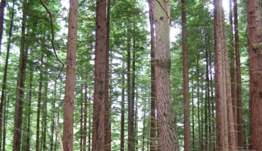 imagen de Por qué se debe apoyar el proyecto aprobado en diputados sobre la definición de terrenos forestales