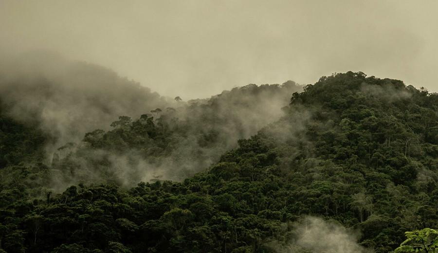 """imagen de La mafia en los bosques colombianos: El """"modus operandi"""" de los traficantes de madera"""