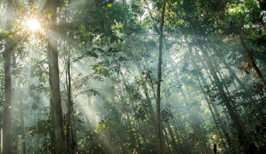 imagen de Descubren que la capa de ozono también protege a la vegetación