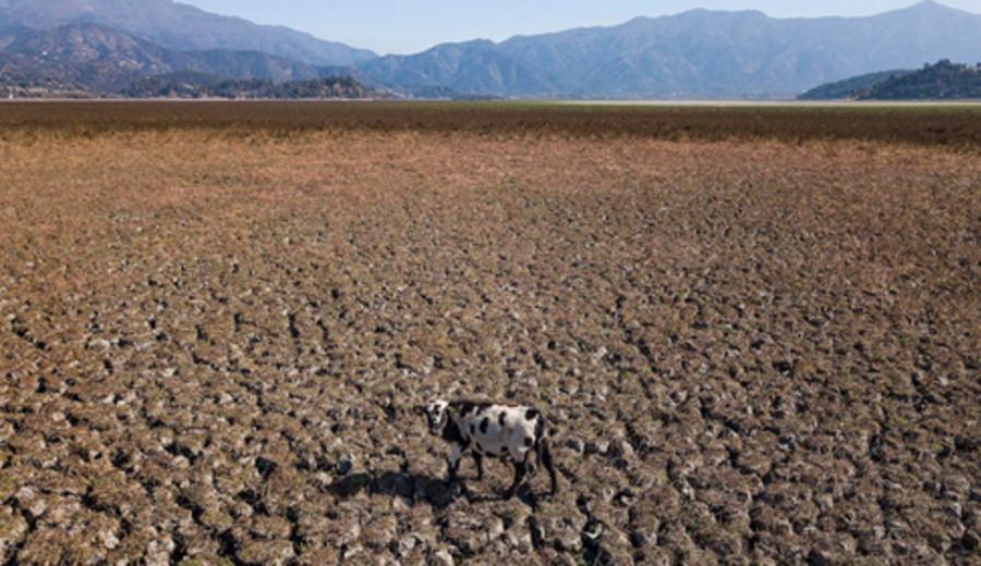 imagen de Argentina y la FAO firmaron acuerdo para apoyar Plan de Acción Nacional de Bosques y Cambio Climático