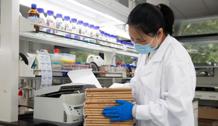 imagen de Científicos chinos sintetizan por primera vez almidón a partir de dióxido de carbono