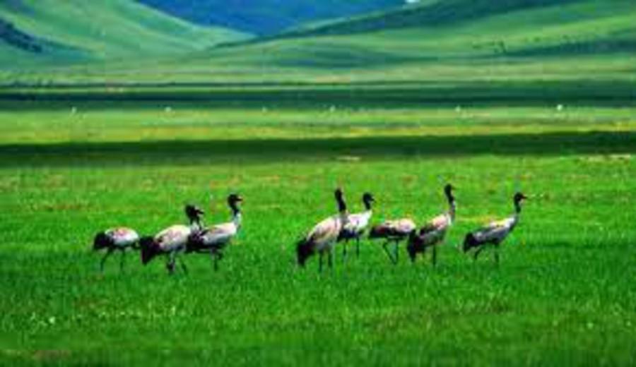 imagen de China emite directriz para protección de biodiversidad